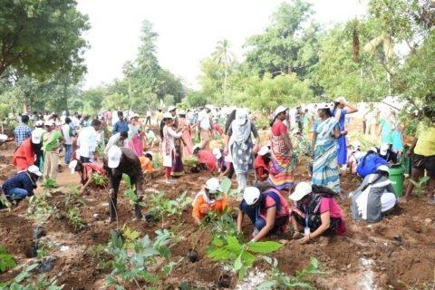 திருச்சி நகரில் அடர்காடுகளை உருவாக்கும் மாநகராட்சி: